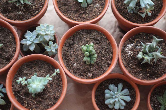 SucculentsLove