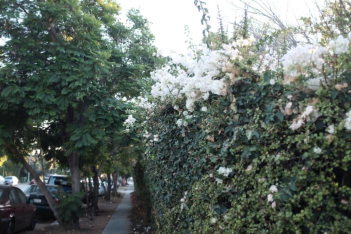 L.A. late walks